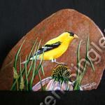 American Goldfinch-Male