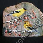 American Gold Finches